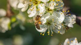 come combattere i pesticidi